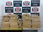 Polícia Civil em Guarujá apreende mais de 240 kg de maconha em sítio