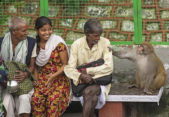 Um macaco-rhesus encontra um lugar vago em um banco na entrada da ponte Lakshman Jhula e puxa a camisa de um local, como se estivesse pedindo comida  (Foto: © Haroldo Castro/Época)