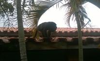 Morador de Sorocaba flagra 'visita' de macaco em casa (Guilherme Costa/Arquivo pessoal)