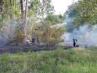 Em oito dias, Amazonas registra mais de 770 focos de incêndio, diz Inpe