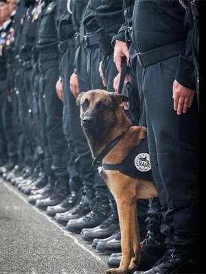 Polícia francesa anunciou morte de cão em operação em Saint-Denis (Foto: Reprodução/Police Nacionale)