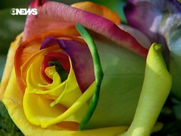 plantas e jardins ornamentais: Holanda une tecnologia à produção de flores e plantas ornamentais