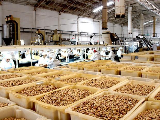 Linha de produção da fábrica Usibras, em Mossoró (RN), principal exportadora de castanha de caju do país (Foto: Anderson Barbosa/G1)