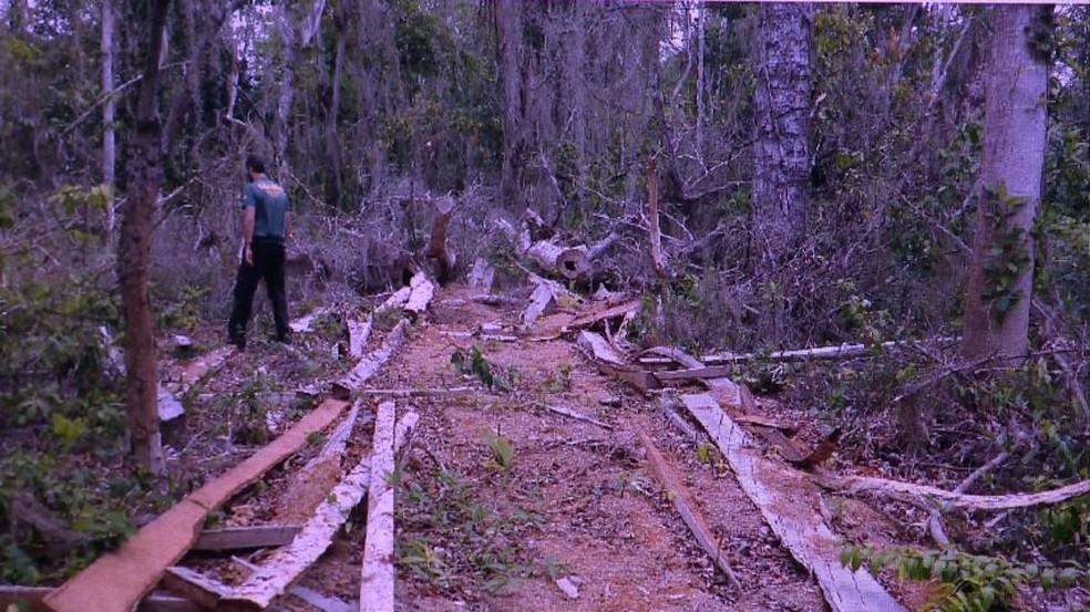 Desmatamento da Mata Atlântica flagrado no Espírito Santo (Foto: Reprodução/ TV Gazeta)