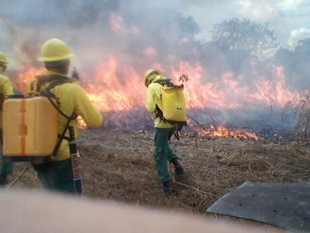 Imagem cedida pelo Ibama mostra os brigadistas tentando apagar as chamas (Foto: Divulgação/Ibama)