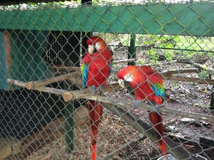 Logradouro abriga araras na Reserva Revecon (Fot Fabíola Gomes/G1)
