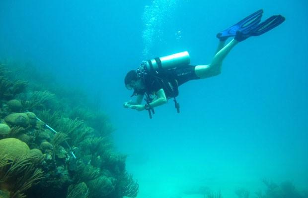O autor Lester Kwiatkowski examina corais no Caribe (Foto: Mak Yiu Ming/Universidade de Exeter/Divulgação)