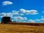 Preço mínimo para trigo irrigado em MT é discutido por câmara técnica
