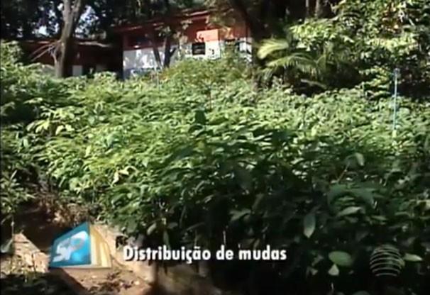 Distribuição de mudas é gratuita em Presidente Prudente (Foto: Reprodução/TV Fronteira)