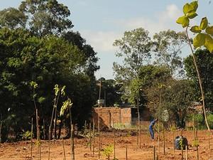 Prefeitura espera replantar 150 hectares por ano nos próximos 10 anos (Foto: Divulgação/Prefeitura)