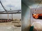 Agentes descobrem túnel iluminado e evitam nova fuga de presos no RN