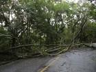 Queda de árvore impede circulação do trenzinho do Corcovado, no Rio