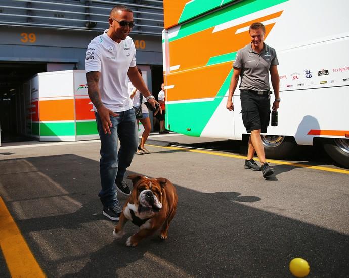 Xodó de Lewis Hamilton, Roscoe é presença constante nos bastidores da Fórmula 1 (Foto: Getty Images)