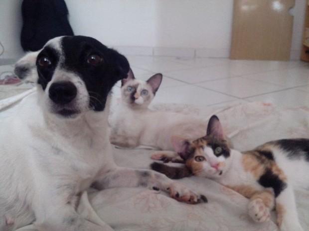 Vereadores derrubam veto a projeto de proteção aos animais, em Ipatinga (Foto: Maria Freitas/G1)