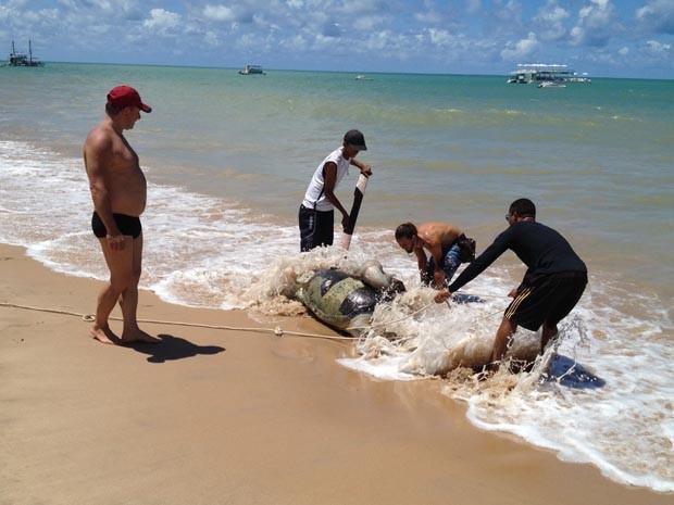 De acordo com informações da Organização Não Governamental, Guajiru, que desenvolve projetos com tartarugas marinhas, no primeiro trimestre de 2013 foram encontradas mais de 70 tartarugas mortas na orla de João Pessoa e Cabedelo, Região Metropolitana. (Foto: Walter Paparazzo/G1)