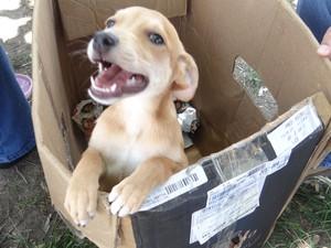 Animais deixados no Centro de Controle de Zoonoses também estão para adoação (Foto: Michelle Farias/G1)