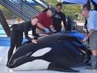Documentário pode ter levado SeaWorld a desistir de criar orcas