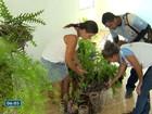 Cariacica é a cidade do ES mais vulnerável à dengue, diz pesquisa