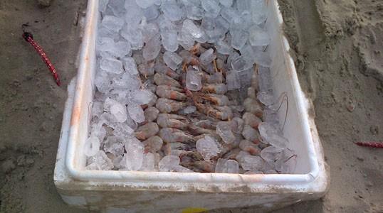 Guardas Municipais apreenderam 50 kg de camarão que estavam enterrados na areia da Praia de Copacabana