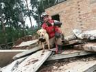Cadela de resgate dos bombeiros de MT ganha certificado internacional