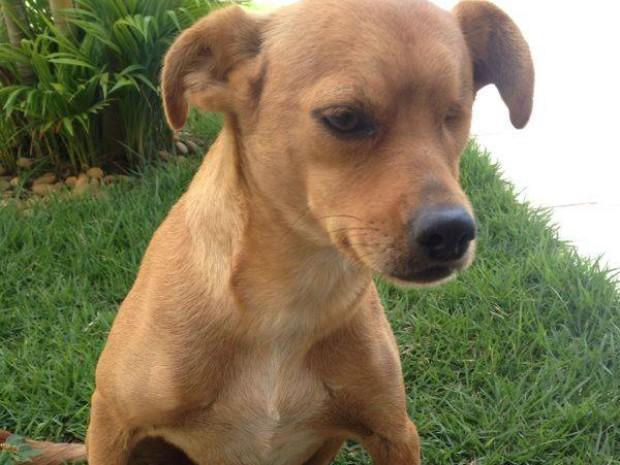 Zoinho tem uma boa índole, afirma veterinário que o tratou. (Foto: Arquivo Pessoal/ Gracielle Moraes)