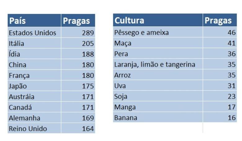 tabela pragas olimpiadas (Foto: Globo Rural)