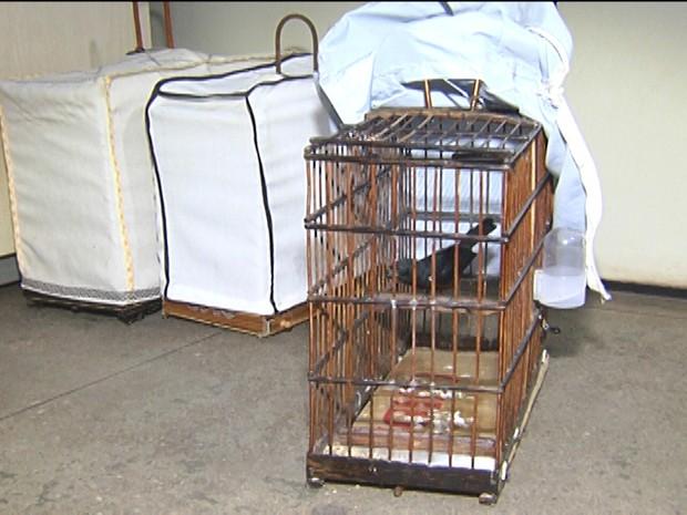 Gaiola com pássaros foi apreendida (Foto: Reprodução/TV Tapajós)