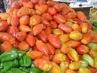 Preço da batata e do tomate sobem e puxam alta da cesta básica no Vale