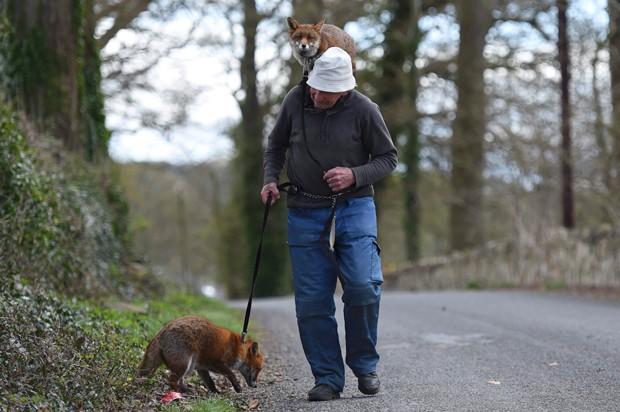 Irlandês Patsy Gibbons mantém duas raposas de estimação (Foto: Clodagh Kilcoyne/Reuters)
