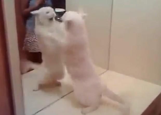 Felino ficou bravo e tentou atacar o próprio reflexo no espelho (Foto: Reprodução)