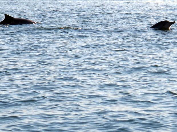 Mortandade não-natural do animal na Baía de Sepetiba é o dobro do aceitável, segundo ONG (Foto: Gabriel Barreira/G1)