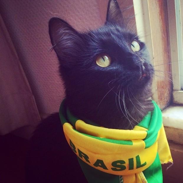 Um dos gatinhos de Paola Oliveira com um lenço estilizado (Foto: Reprodução Instagram)