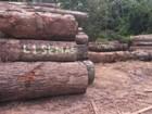 Semas leiloa madeira apreendida (Divulgação/ Semas)