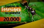 Organização das formigas impressiona