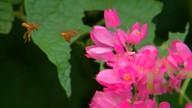 Visitação floral influencia no sabor do mel produzido pelas abelhas