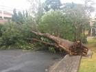 Árvore cai em fiação e deixa casas sem energia em bairro de Campinas