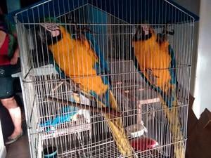 Aves resgatadas serão reintegradas à natureza (Foto: Divulgação/PRF)