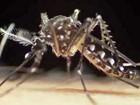 CE registra 48 novos casos suspeitos de microcefalia ligados ao zika vírus