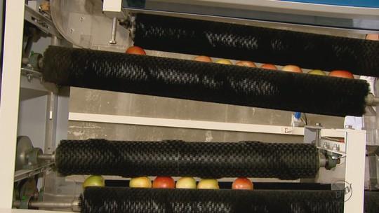 Embrapa desenvolve máquina que limpa frutos sem usar água