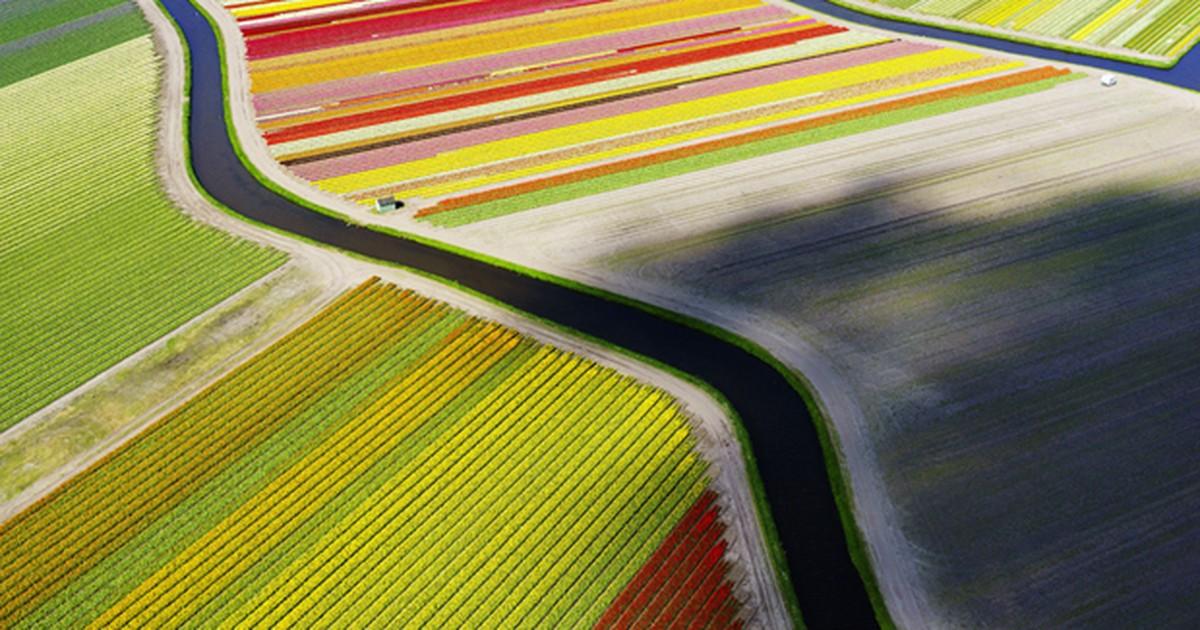 Foto de tulipas tirada com drone disputa prêmio da National Geographic