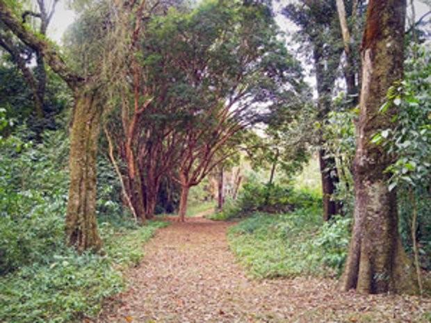 Nova trilha está disponível para visitação (Foto: Divulgação/ Prefeitura de Jundiaí)