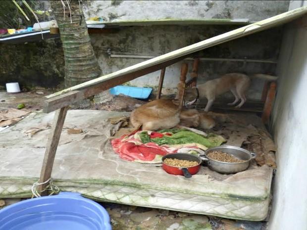 Animais estavam abrigados em casas e estavam em condições irregulares (Foto: Divulgação/Polícia Civil)