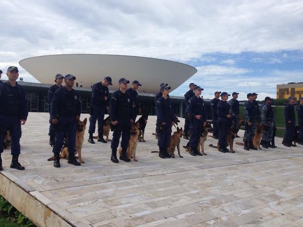 Policiais militares do grupamento com cães ocupam rampa do Congresso Nacional (Foto: Polícia Militar/Divulgação)
