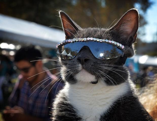 Gato chamou atenção por usar óculos fashion durante festival  (Foto: Mark Ralston/AFP)