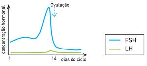 Gráfico D (Foto: Reprodução/UERJ)