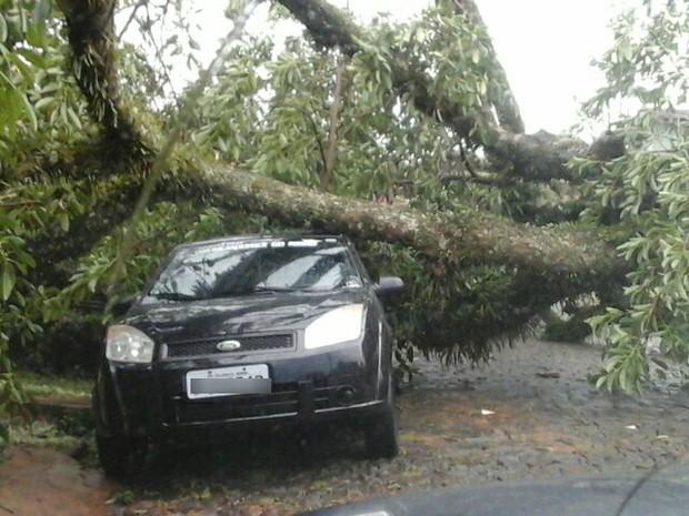 Árvore caiu sobre um carro nesta sexta (2) em Telêmaco Borba (Foto: Marcos Mello/Plantão TB)