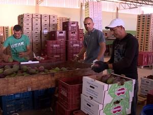 Agricultura irrigada gera contratações (Foto: Reprodução/ TV Grande Rio)