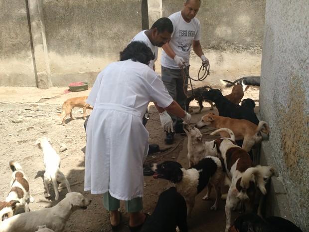 Equipe do Centro de Vigilância Ambiental selecionou alguns dos animais mais debilitados. (Foto: Penélope Araújo/G1)