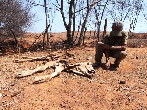 Agricultor se emociona ao se deparar com mais um animal morto em sua propriedade (Foto: Geraldo Humberto / Inter TV)