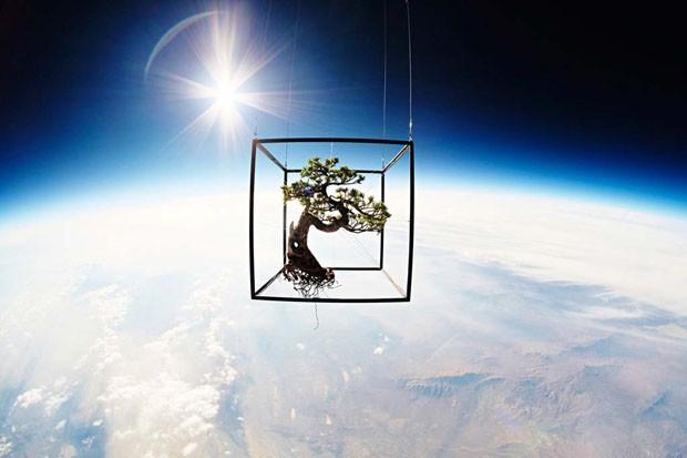 Ready-made botânico: plantas naturais viram obras de arte (Foto: Divulgação)